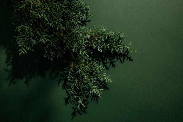 Grey Labdanum an edgy, dark chypre von Abel Odor